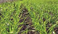 Защищаем будущий урожай из семени!