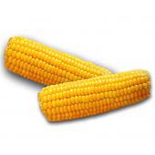 Кукурудза в качанах
