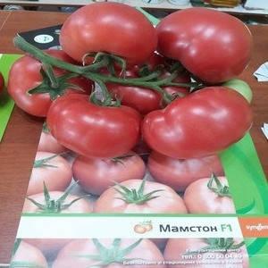 Мамстон F1 / MAMSTON F1, 50 семян — томат индетерминантный розовоплодный, Syngenta, фото 2