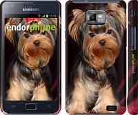 """Чехол на Samsung Galaxy S2 Plus i9105 Йоркширский терьер """"929c-71"""""""