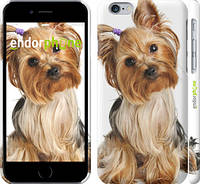 """Чехол на iPhone 6 Йоркширский терьер с хвостиком """"930c-45"""""""