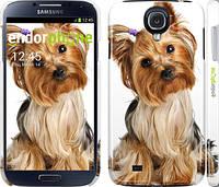 """Чехол на Samsung Galaxy S4 i9500 Йоркширский терьер с хвостиком """"930c-13"""""""