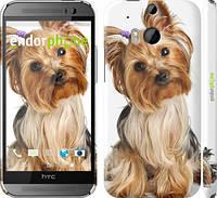 """Чехол на HTC One M8 dual sim Йоркширский терьер с хвостиком """"930c-55"""""""