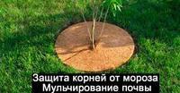 Круг приствольный кокосовый