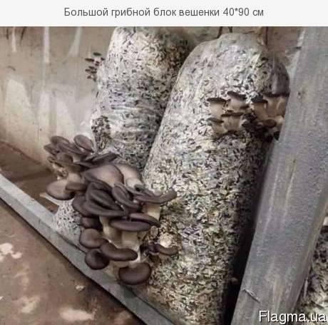 Инструкция по выращиванию вешенки, шиитаке, белых степных грибов, гериции, опят в блоках