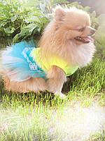 Платье для собак Карнавал