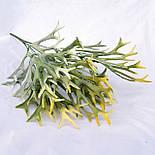 Куст Оленьи рога Платицериум, 40 см, фото 5
