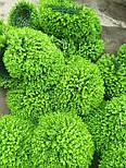 Искусственный шар самшит зеленый 60 см, фото 5