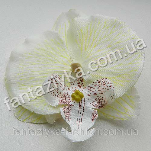 Орхидея фаленопсис головка 9см, кремовая
