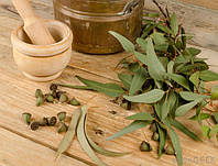 Эвкалипт - сушеная трава - (60 г.) + консультация