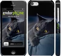 "Чехол на iPhone 5c Дымчатый кот ""825c-23"""