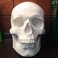 Гипсовый череп маска на стену, декоративный, белого цвета, в натуральную величину под роспись