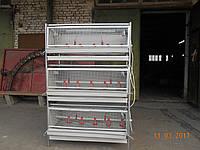Брудер двухъярусный  для содержания суточных бройлеров и перепелов