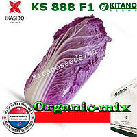 Капуста пекинская краснокочанная (фиолетовая) KS 888 F1, 1000 семян, ТМ KITANO SEEDS, фото 1