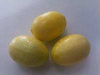 Лимон Декоративный Мини