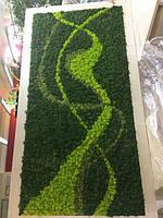 Стабилизированный мох - панели для интерьера цена за 1 шт панели без рамки размер 300мм * 300мм 820грн,