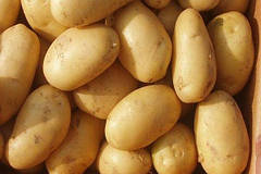 Особенности картофеля сорта Лилея