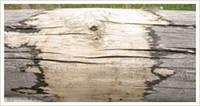 Гипохлорит натрия - средство для отбеливания и обеззараживания древесины