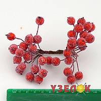 Калина сахарная красная