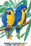 Схемы для вышивки крестом на канве А4-14-019 Пара попугаев