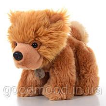 М'яка іграшка SD0467 собачка, чау-чау, 35 див.