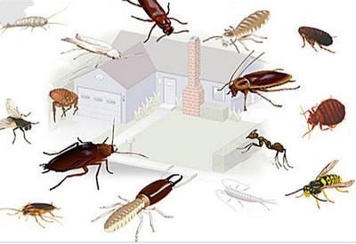 Средства борьбы с насекомыми (Тараканамы, мухами, клопами, блохами, слизняками.)