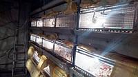 Брудер одноярусный для содержания суточных перепелов , цыплят  1100*600*350
