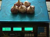 Чеснок посадочный сорт Любаша, - зубок 1репродукция 2.5-4см