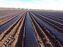 Агроволокно черное, плотность 50 г/м.кв. (1.6мх100м), фото 3