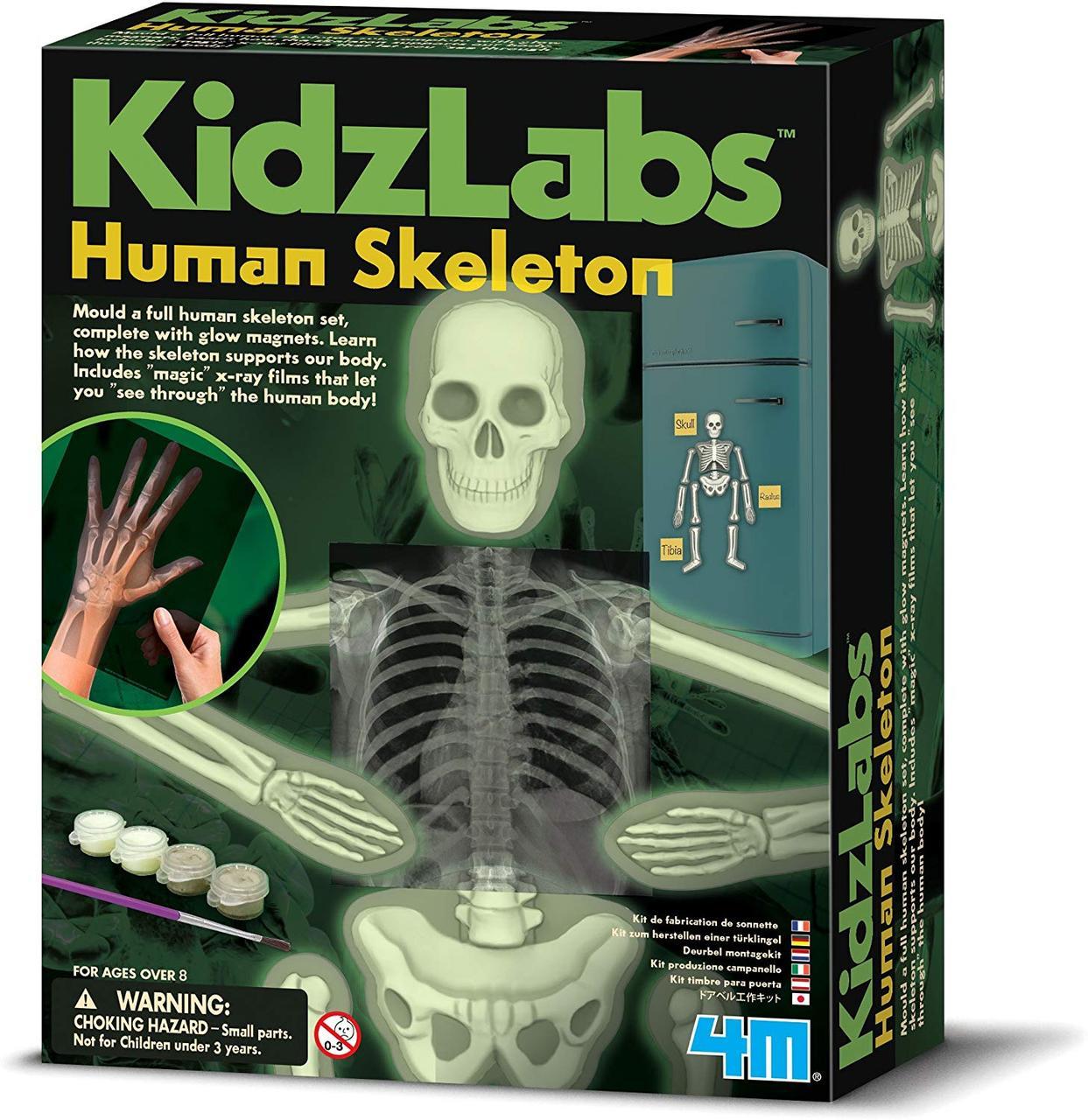 Набор для творчества Светящийся скелет человека 4M (00-03375)