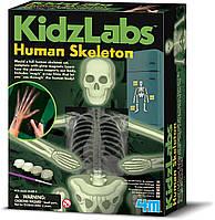 Набор для творчества Светящийся скелет человека 4M (00-03375), фото 1