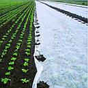 Агроволокно белое, плотность 50 г/м.кв. (1.6мх100м), фото 4