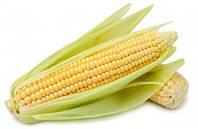 Кукуруза Брусница сахарная скороспелая с отличными великолепными вкусовыми качествами, упаковка 1 кг