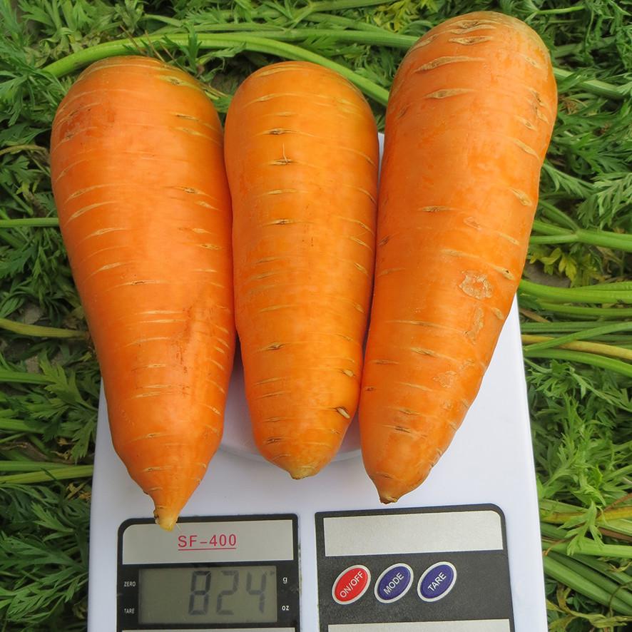 Семена моркови Болтекс, Clause 100 грамм   профессиональные