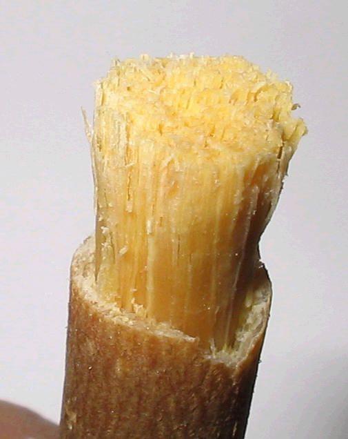 Мисвак арабская зубная щетка