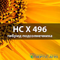 НС Х 496 OR (7 рас, 5 рас) гибрид подсолнечника (СУМО)