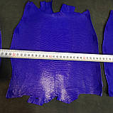 Шкіра ігуани синя, фото 6