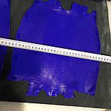 Шкіра ігуани синя, фото 7