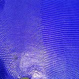 Шкіра ігуани синя, фото 8