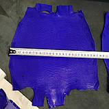 Шкіра ігуани синя, фото 5