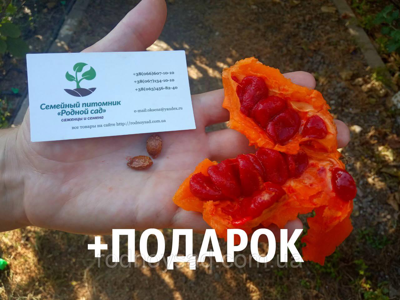 Момордика харанция семена 10шт (жёлтый огурец,  бешеная дыня, индийский гранат, Momordica charantia) насіння