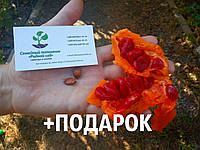 Момордика харанция семена 10шт (жёлтый огурец,  бешеная дыня, индийский гранат, Momordica charantia) насіння, фото 1