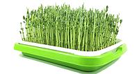 Лоток  для гидропонного выращивания рассады и проращивания семен, зерен