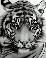 Картина по номерам Величественный тигр (VP1194) 40 х 50 см DIY Babylon