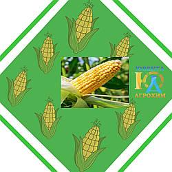 Кукурудза ЕС ТРІО урожай 2014 року