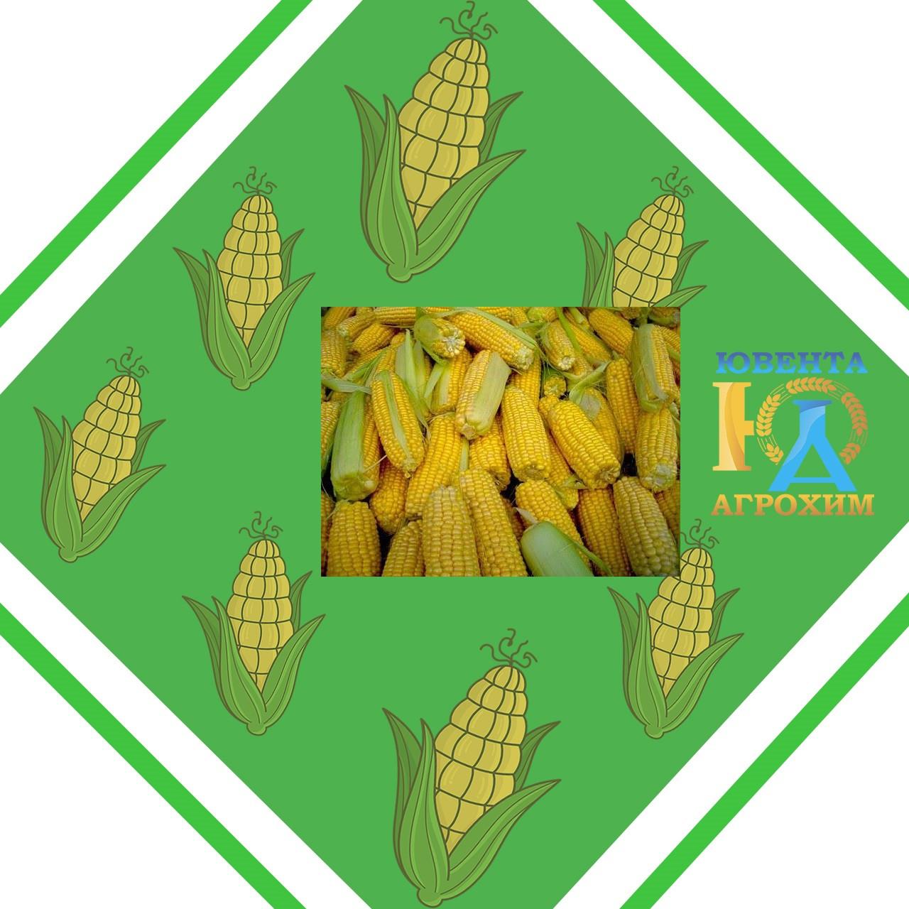 Семена кукурузы ЕС Битл