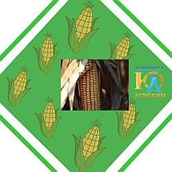 Гибрид семян кукурузы  НС 2014