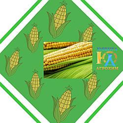 Семена кукурузы на силос НС 300