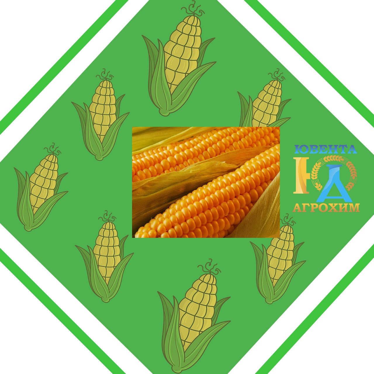 Импортный гибрид семян кукурузы Axelle