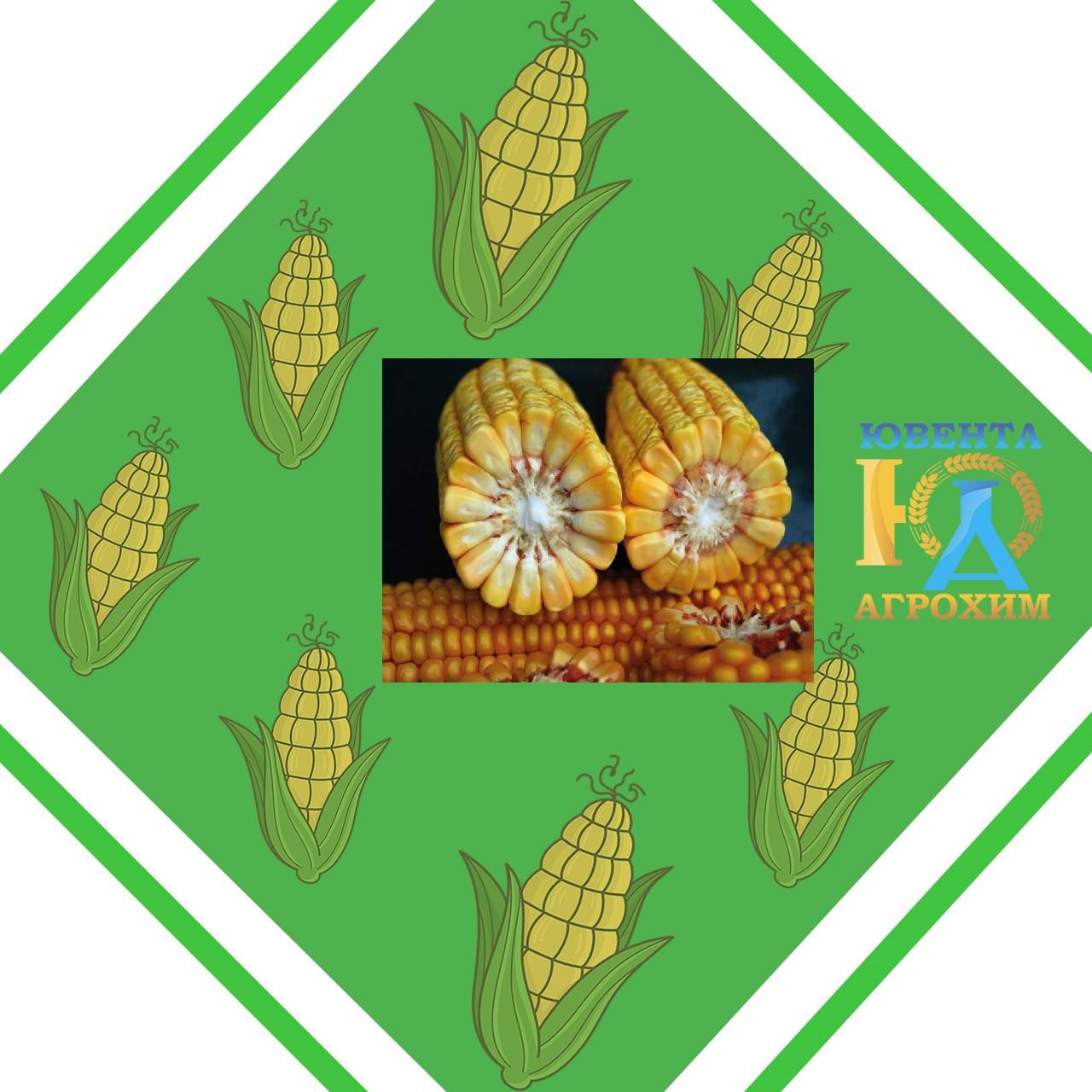 Семена кукурузы на силос MAS 26.K